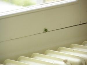 green bug on my window